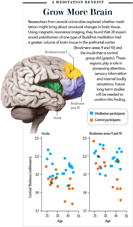"""CREDIT: SOURCE: """"MEDITATION EXPERIENCE IS ASSOCIATED WITH INCREASED CORTICAL THICKNESS,"""" BY SARA W. LAZAR ET AL., IN NEUROREPORT, VOL. 16, NO. 17; NOVEMBER 28, 2005; David C. Killpack"""